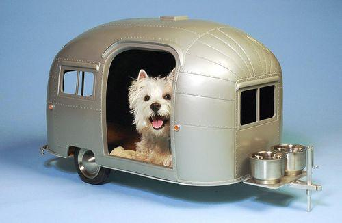 voyage-camping-car-animal
