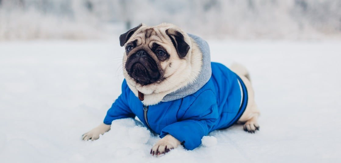 chien hiver froid