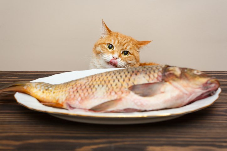 chat poisson